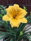 Uma abelha recolhe o mel em uma flor amarela, flores de florescência! imagem de stock
