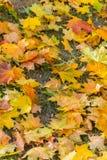 Uma ainda-vida bonita das folhas de outono amarelas que encontram-se na grama pisada seca Beleza do outono em toda sua glória Foto de Stock Royalty Free