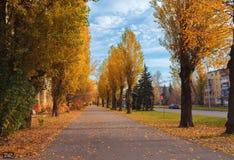 Uma aleia da árvore do outono do álamo no fundo do céu nebuloso Aleia asfaltada da cidade árvore do centro Tempo nebuloso imagem de stock