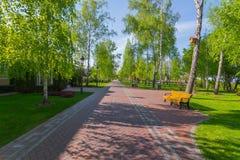 Uma aleia longa que recuam na distância em um parque com um bosque do vidoeiro um banco com um homem de descanso e um ` s do páss Foto de Stock Royalty Free