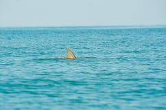 Uma aleta do golfinho no oceano fotografia de stock royalty free