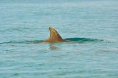 Uma aleta do golfinho no oceano imagem de stock royalty free