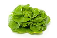Uma alface verde Fotos de Stock Royalty Free