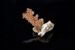 Uma amostra de cobre nativo Imagens de Stock Royalty Free