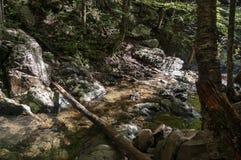 Uma angra no parque nacional de Shenandoah foto de stock