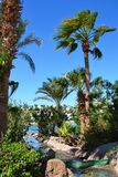 Uma angra pequena com bancos de pedra corre através de palmeiras crescentes Fotos de Stock Royalty Free