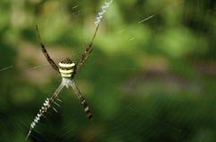 Uma aranha bonita Imagens de Stock