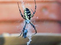Uma aranha de jardim imagem de stock royalty free
