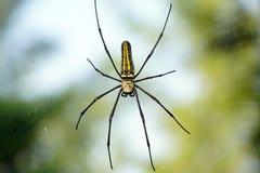 Uma aranha de madeira gigante em sua Web Fotografia de Stock Royalty Free