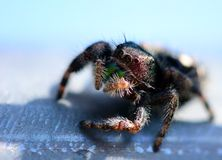 Uma aranha de salto bonita no sol imagem de stock royalty free