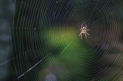 Uma aranha em uma teia de aranha em antecipação ao alimento 2 imagens de stock