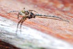 Uma aranha marrom foto de stock