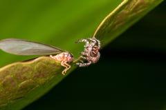 Uma aranha no fundo da natureza Fotos de Stock Royalty Free