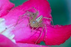 Uma aranha no fundo da natureza Fotografia de Stock