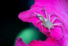 Uma aranha no fundo da natureza Fotografia de Stock Royalty Free