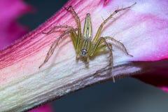 Uma aranha no fundo da natureza Foto de Stock