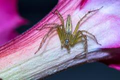 Uma aranha no fundo da natureza Foto de Stock Royalty Free