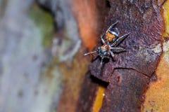 Uma aranha no fundo da natureza Imagens de Stock Royalty Free