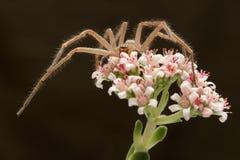 Uma aranha senta-se em uma flor bonita Imagens de Stock