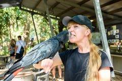 Uma arara preta que toma uma semente de girassol de uma boca dos girl's Papagaio preto australiano da arara fotos de stock royalty free