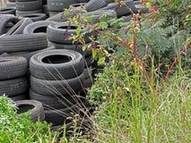 Uma armazenagem de pneus usados com plantas Imagens de Stock Royalty Free