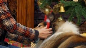 Uma aro com chifres da rena foi posta sobre o cão video estoque