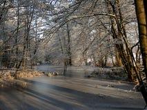 Uma associação congelada entre árvores Raias da luz solar que brilham completamente foto de stock royalty free