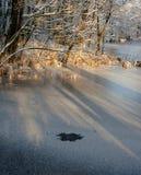 Uma associação congelada entre árvores Raias da luz solar que brilham completamente imagens de stock