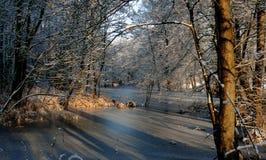 Uma associação congelada entre árvores Raias da luz solar que brilham completamente imagem de stock royalty free