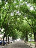 Uma avenida alinhada com árvores de pagode Imagem de Stock