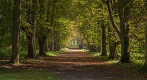 Uma avenida das árvores no verão fotos de stock royalty free