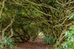 Uma avenida de ramos entrelaçados em Escócia do sul no outono fotografia de stock