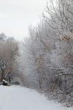 Uma avenida nevado da floresta Foto de Stock Royalty Free