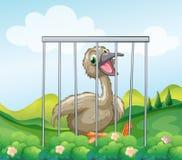 Uma avestruz dentro da gaiola Fotos de Stock