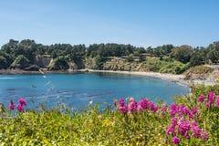 Uma baía na costa de Mendocino Imagem de Stock