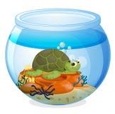 Uma bacia da ?gua e uma tartaruga Fotografia de Stock