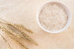 Uma bacia de arroz com as orelhas do arroz no fundo fotos de stock