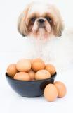 Uma bacia de ovos na frente do cão Imagens de Stock