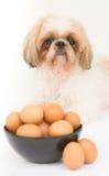Uma bacia de ovos na frente do cão Foto de Stock