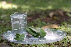 Uma bebida fresca do verão do suco de Vera do aloés fotografia de stock royalty free