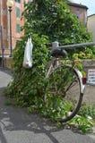 Uma bicicleta esquecida coberto de vegetação com as videiras Fotografia de Stock Royalty Free