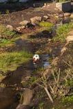 Uma bola em um rio imagens de stock