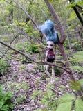 Uma boneca jogada suja pendura em madeiras de uma árvore na primavera Imagem de Stock