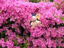Uma boneca macia do elefante do bebê nos arbustos de florescência cor-de-rosa Imagem de Stock
