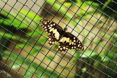Uma borboleta Fotografia de Stock Royalty Free