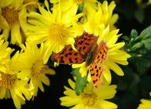 Uma borboleta Imagens de Stock Royalty Free