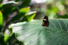Uma borboleta Imagens de Stock