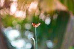Uma borboleta alaranjada na coluna verde Imagens de Stock Royalty Free