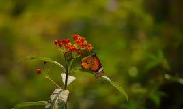 Uma borboleta bonita foto de stock