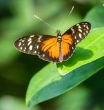 Uma borboleta bonita em uma folha fotografia de stock